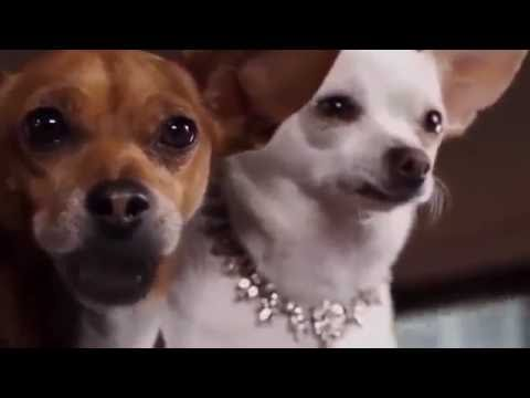 Beverly Hills Chihuahua 2 2011 Marcus Coloma Erin Cahill Susan Blakely