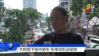 乌节路君悦酒店外大树倒下 一辆轿车被砸中