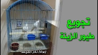 تجويع الطيور  | قفص طيور الكوكتيل