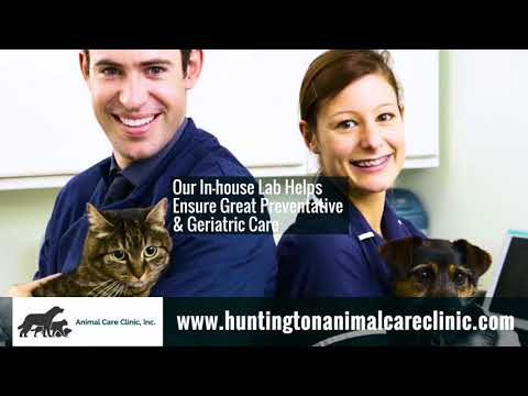 Veterinarians In Huntington WV, Details At YellowPages.com
