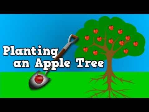 Planting an Apple Tree with Harry Kindergarten!