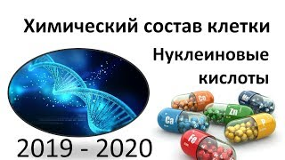 3. Нуклеиновые кислоты (9 или 10-11 класс) - биология, подготовка к ЕГЭ и ОГЭ 2020