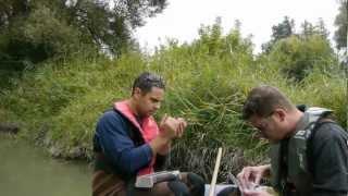 Les écosystèmes du Rhône sous l