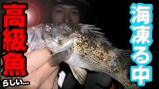 海も凍る極寒の中高級魚クロソイを釣る!