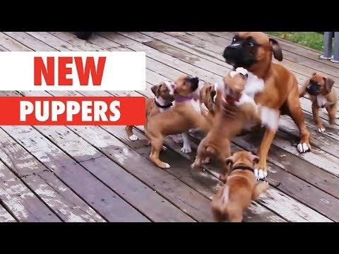 New Puppers | The Pet Collective