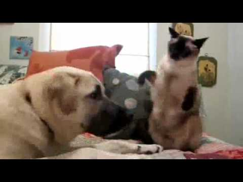 Youtube Boxing Cat Fights Dog