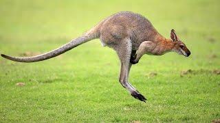 Самые быстрые животные в мире  ТОП 10! The fastest animals in the world