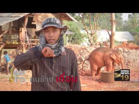 ย้อนหลัง ไขปมข่าว 1/04/60 : คน ช้าง เถื่อน (1/3)