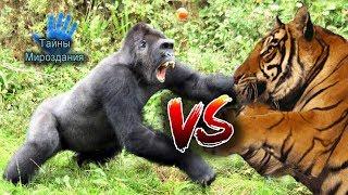 НЕВЕРОЯТНЫЕ БИТВЫ ЖИВОТНЫХ, СНЯТЫЕ НА КАМЕРУ. РЕАЛЬНЫЙ ЖИВОТНЫЙ МИР. ANIMAL FIGHTS