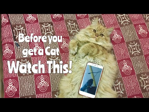 BEFORE YOU GET A PERSIAN Cat WATCH THIS! | Wildly Indian
