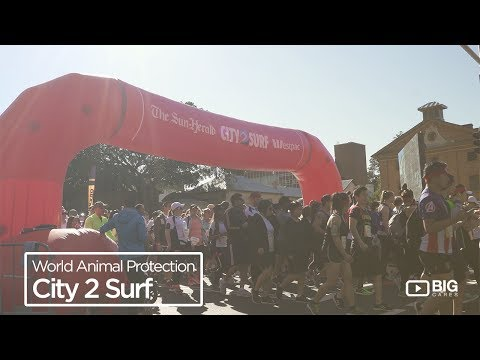 World Animal Protection : City 2 Surf, Running to Help End Animal Cruelty