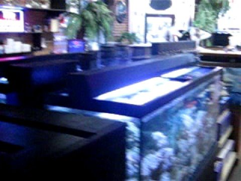 The Aquarium In Old Town Wichita Ks Youtube