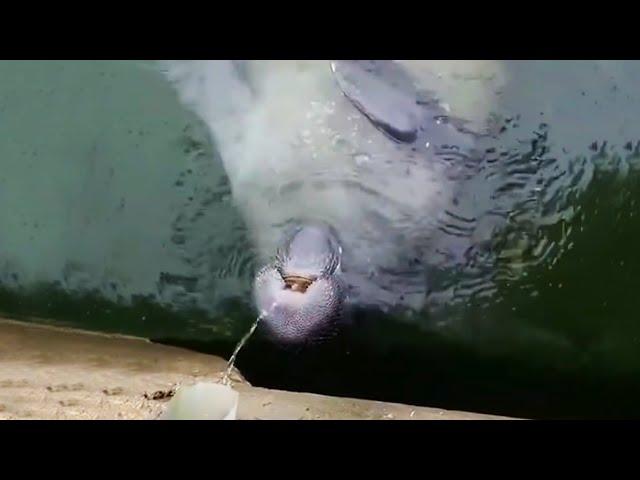 Incredible Lightning Strike Over New York
