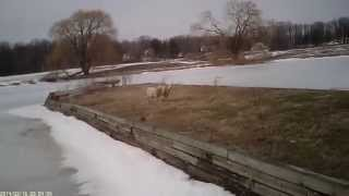DJI Phantom VS. Livestock Fail