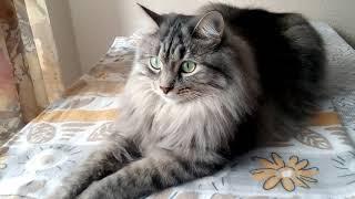 Кошка Марта на передержке🐈 Передержка животных в Казани)