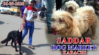 Saddar Sunday Dogs Market 6920 updates video Rottweiler American Pit Bull Terrier In Urdu/Hindi