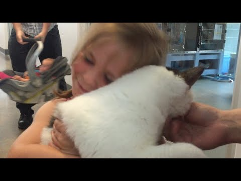 Little Girl Reunited With Her Kitten Amazing Pet Reunion Video 2016 | Daily Heart Beat