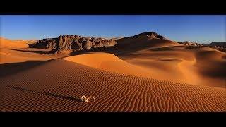 Пустыня Сахара. Можно ли выжить?