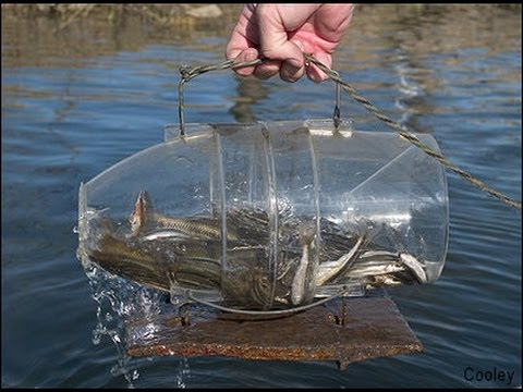 How to make a minnow trap youtube for How to make fish bait