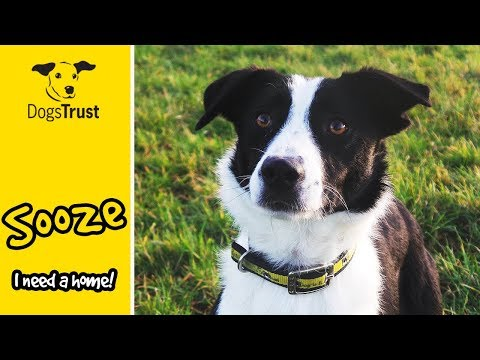 Sooze The Border Collie Cross Loves Training And Toys! | Dogs Trust Ballymena