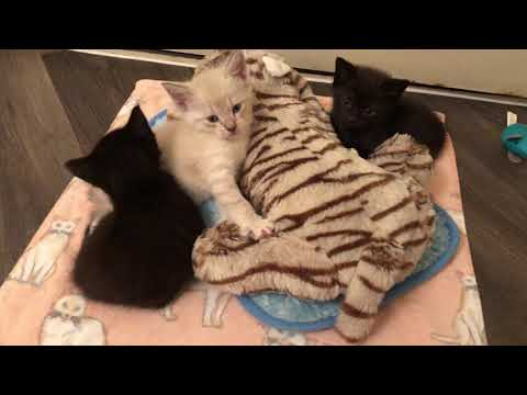Mother Cat Abandoned Her Tiny Kittens!