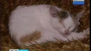 Комната кошек откроется в Иркутской зоогалере