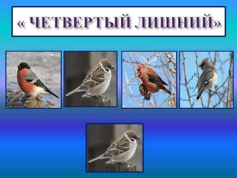 Папка передвижка для детского сада зимующие птицы