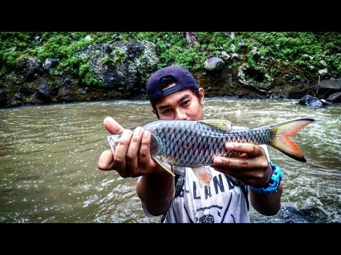 Spot Mancing Hampala Di Bandung