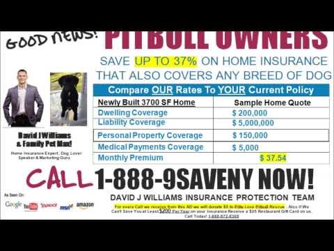 pitbull insurance