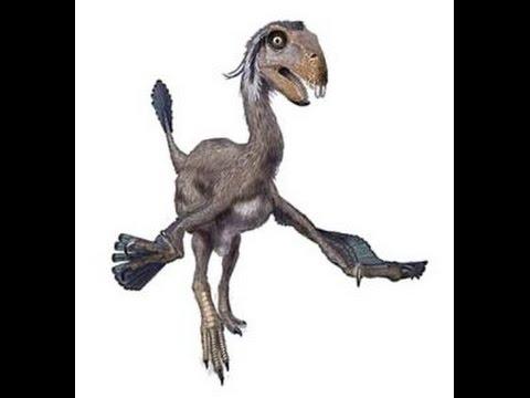Dinosaurios Raros Lista Dinosaurios Los dinosaurios de juguete son nuestra pasión, comienza tu colección con un dinosaurio schleich elige el tuyo en nuestra selección de dinosaurios de juguete de marketlace, y adentrarte en un. dinosaurios raros lista dinosaurios