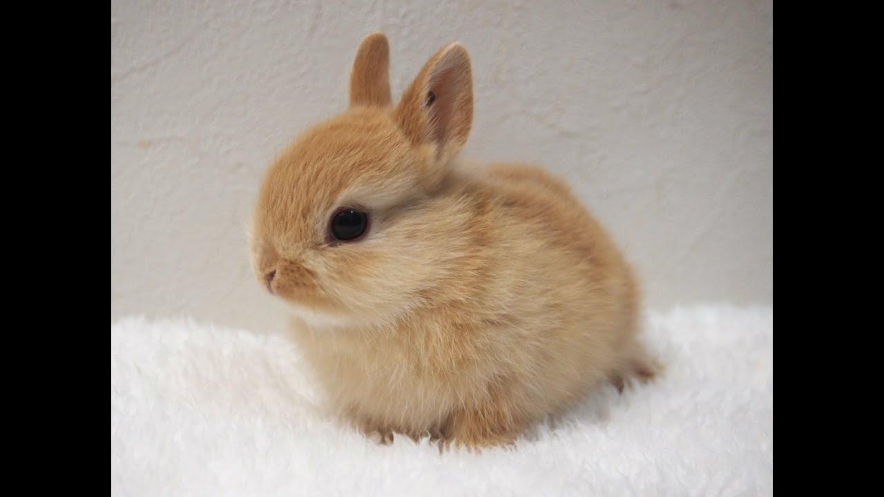 Cute Rabbits cute rabbit 🐇 - You...