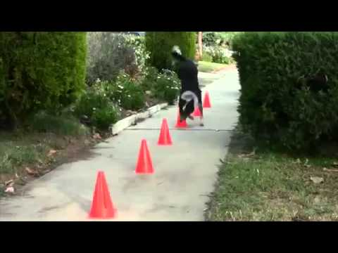 Smart Dog Does Some Amazing Tricks