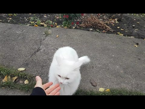 Cute cat videos - Black & White cats walking outdoors
