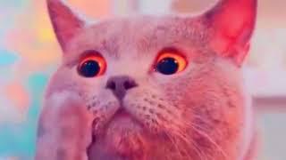 НОВЫЕ ПРИКОЛЫ ПРО КОТОВ С ОЗВУЧКОЙ Смешные коты и кошки топовая подборка 2018 для детей