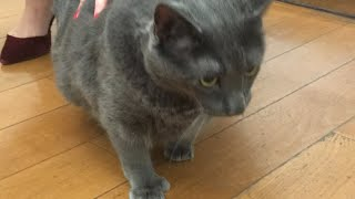 LIVE: Bruno the cat visits The Dodo