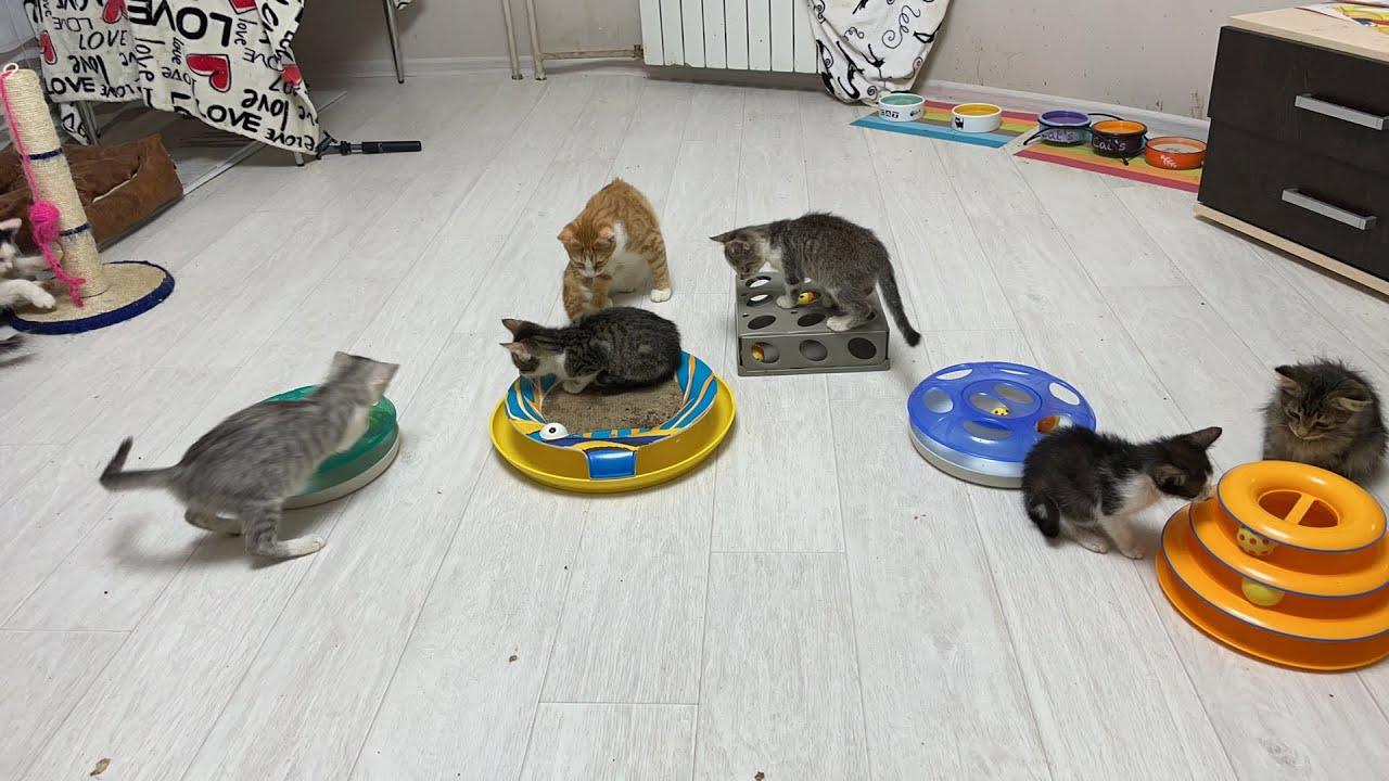 Kittens want live stream