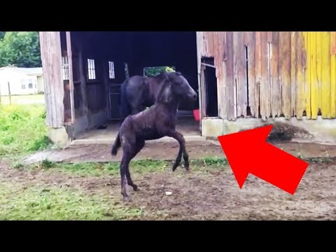 8-Week-Old Foal Who Wants To Play Has A Trick Up Her Sleeve When Mom Turns Around