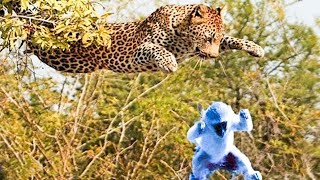 Moments Of Wild Animal Fights Leopard Kills Monkey Female And Adopts Monkey's Son thumbnail