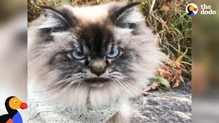 Grumpy Cat Explains Why Winter is THE WORST | The Dodo