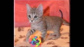 Москва. Маленький шустренький котенок Филя в дар!!