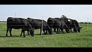 Gallagher Electric Fence For Cattle