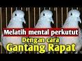 Melatih Mental Perkutut Lokal Alam  Mp3 - Mp4 Download