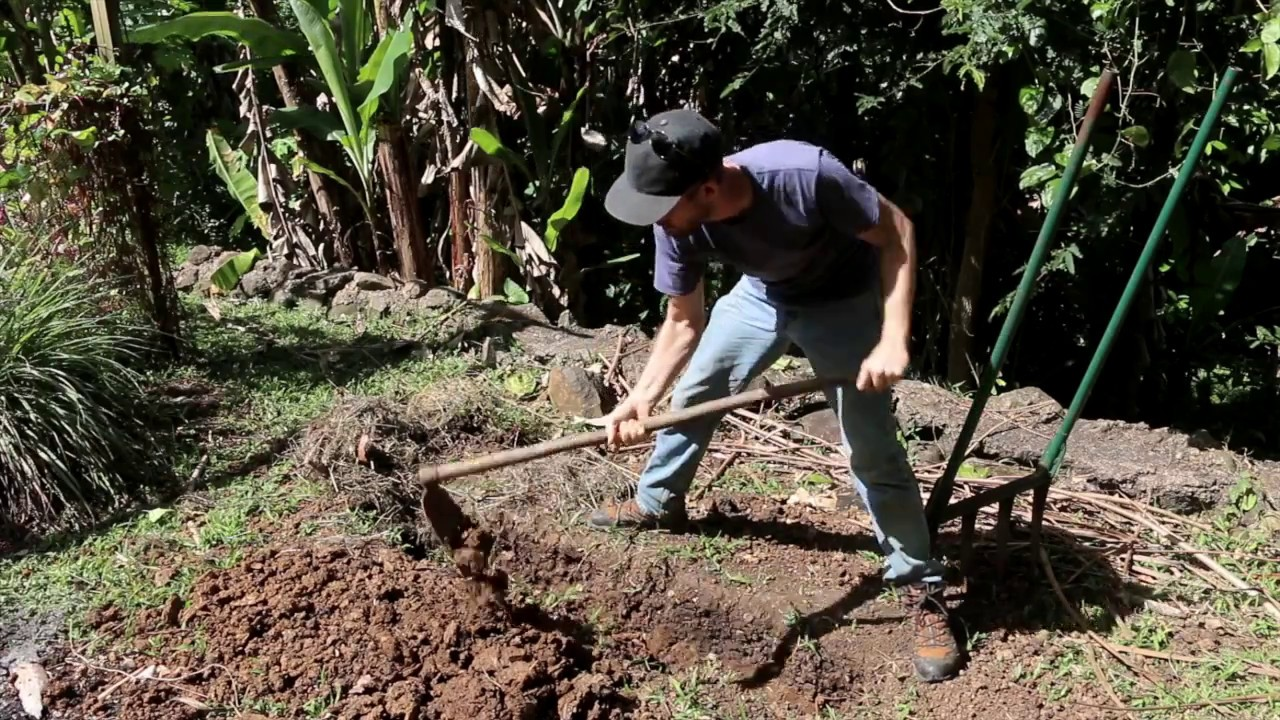 Trench-Planting Yams