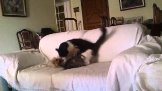 Чем занимаются кот с маленькой собакой, когда хозяину не до них?
