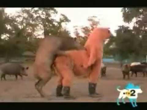 Секс с конем девушки