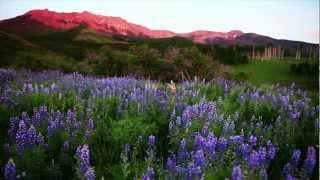Summer in Telluride