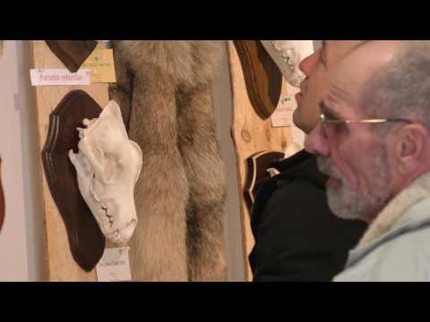 Medžioklės trofėjų parodoje Alytuje – ir rekordinių ragų kolekcijos