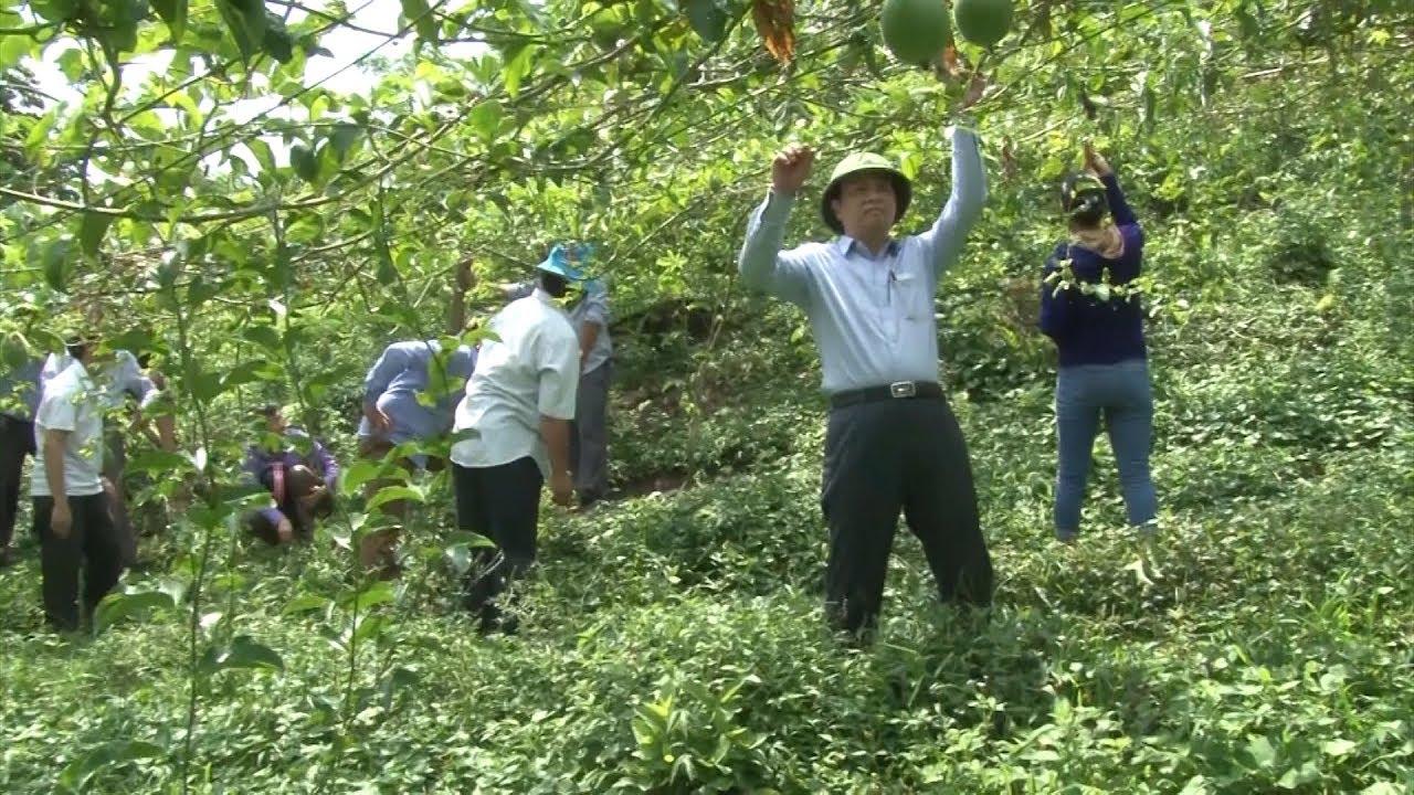 Phong trào xây dựng bản nông thôn mới ở miền Tây Nghệ An | THND