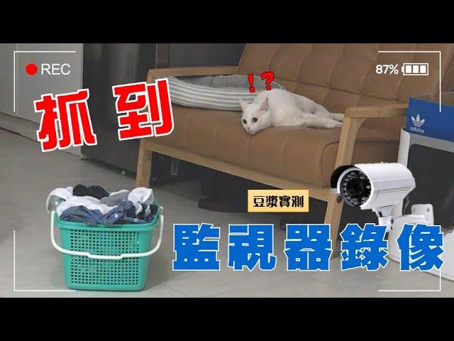 【豆漿實測】監視器全程錄下 貓咪趁人不在時的變態行為