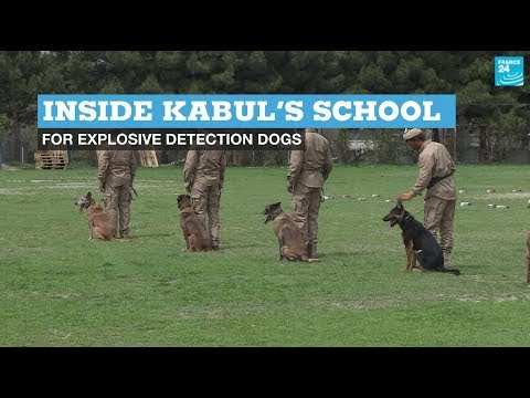 Inside Kabul's school for explosive detection dogs
